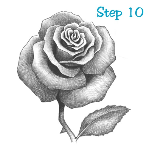 Rose Drawing Lesson 10 | things i want to try and draw ...