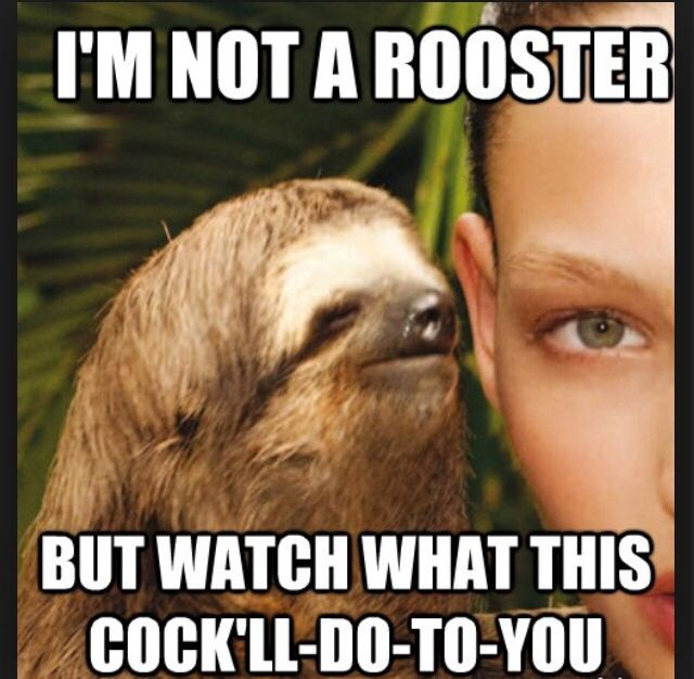 additional sos sloths funny pics