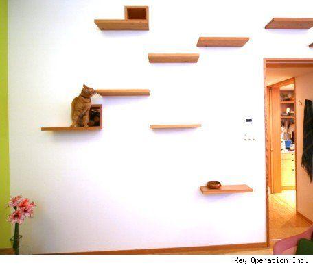 cat friendly house home ideas pinterest