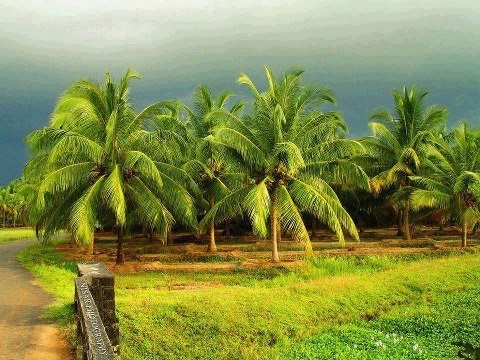 Kerala India Beautiful Places Bucket Pinterest