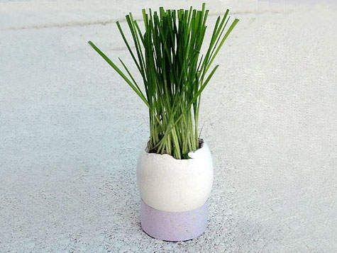 Egg shell planter