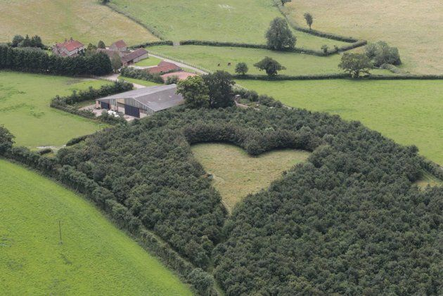 Heart field- A heart-shaped meadow, created by a farmer as a tribute to his late wife, can be seen from the air near Wickwar, South Gloucestershire. The point of the heart points towards Wotton Hill, where his wife was born. (SWNS.com)