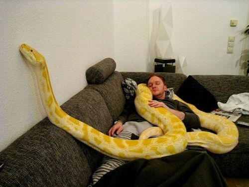 ANACONDA AS A PET | EVERY THING & ANY THING. | Pinterest