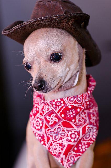 Im a cowgirl....