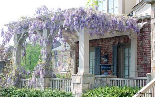 Wysteria can take over and run wild or it 39 s super easy to Front porch without roof