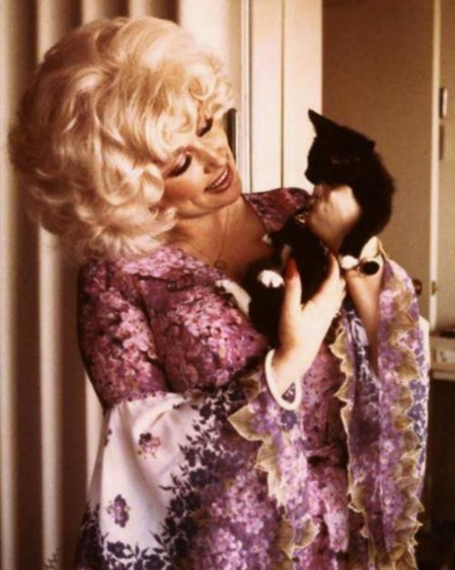 Dolly Parton with a kitten; your argument is invalid