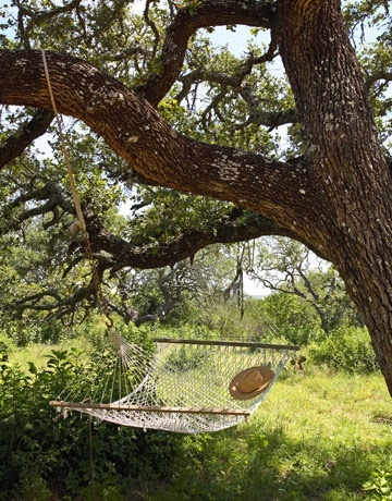 Hammocks under a tree.