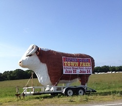 Every morning I drive to work and the scenery changes…pumpkins for Fall, deer in snow for Winter, fields of purple flowers for spring…but …Summer is my favorite because that is when the giant bull hangs out by the highway announcing the Town Fair!  I took this while sitting in traffic…yes…we have traffic!
