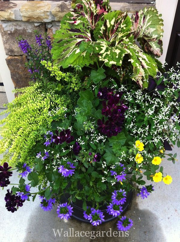 Pin by penny thompson on container gardens pinterest - Container gardens for sun ...
