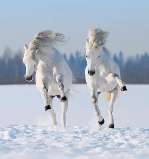 Snowdancers