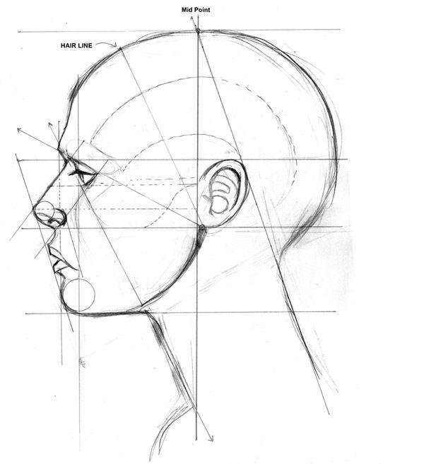 Правильно рисовать профиль человека