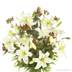 Wholesale flowers are an excellent way to augment your existing holiday decorations! Our special pack of white Asiatic Lilies and red/burgundy Hypericum is perfect for the holidays! Whether you are having friends and family over or simply for your enjoyment, this stunning package of long-lasting wholesale flowers is perfect for any and every occasion!