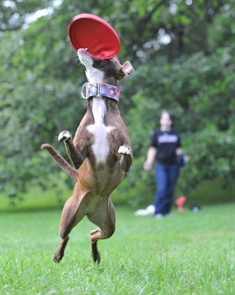 The whole family loves a frisbee.
