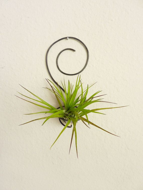 Wire air plant holder spiral wall hanging for Air plant wall hanger