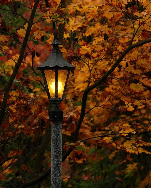 The glow of street lamps in Fall