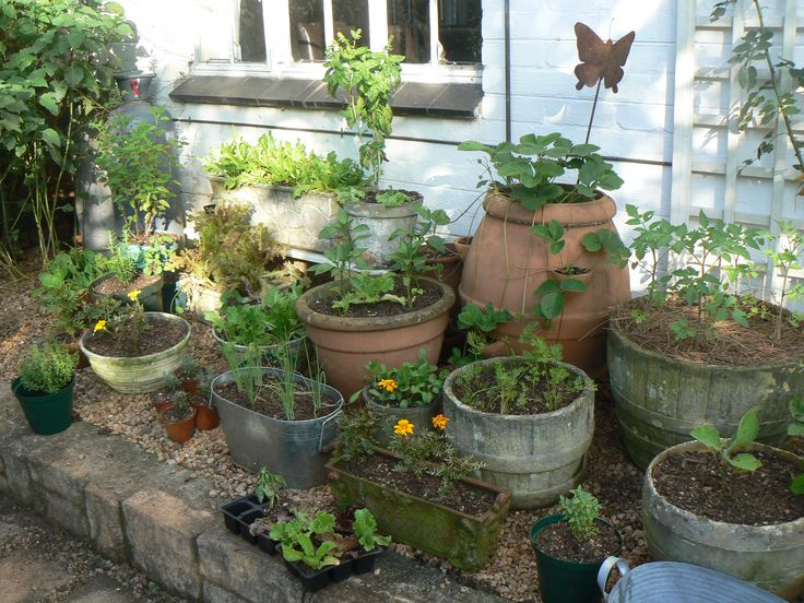 Container herb garden garden ideas pinterest for Patio herb garden designs containers