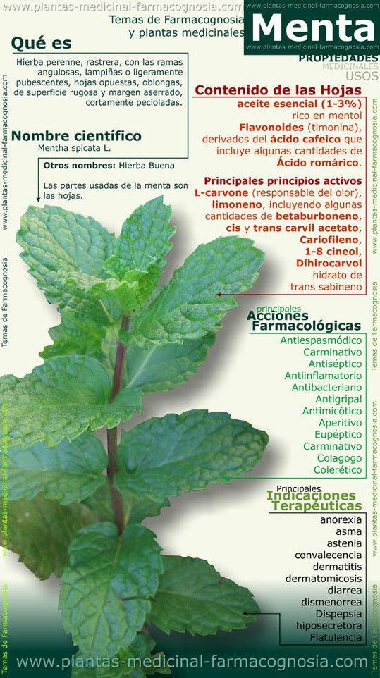 Aplicaciones medicinales de la planta de la Menta #infografia