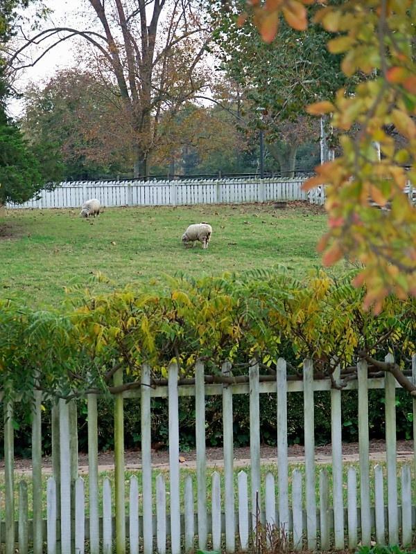 Colonial Williamsburg Fences Pinterest
