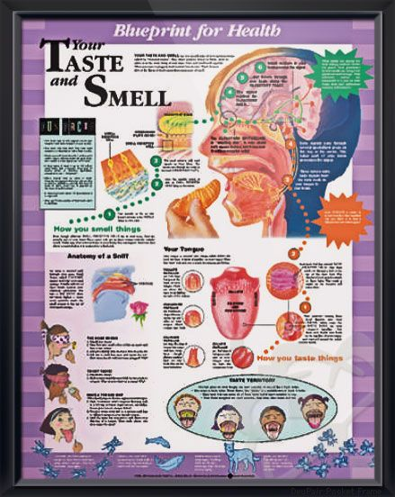 taste and smell anatomy Play this quiz called smell and taste anatomy and show off your skills.