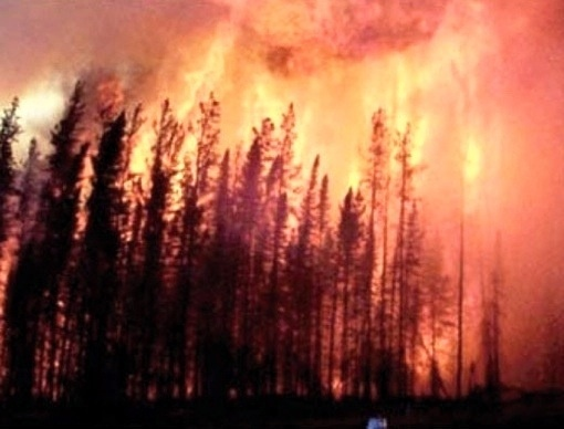 images forest fires google search forest fires pinterest