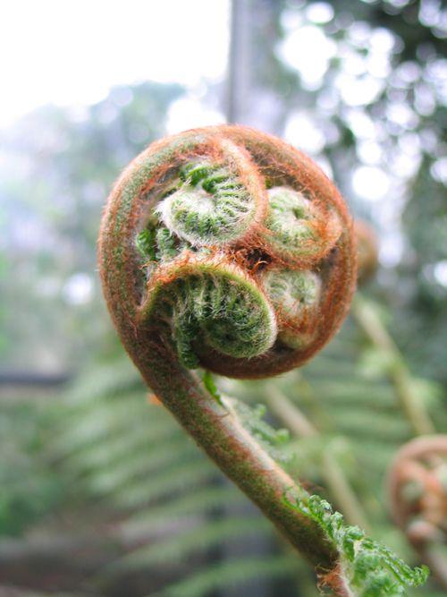 Botanische Tuinen op Fort Hoofddijk - Utrecht: pinterest.com/pin/566468459351599131