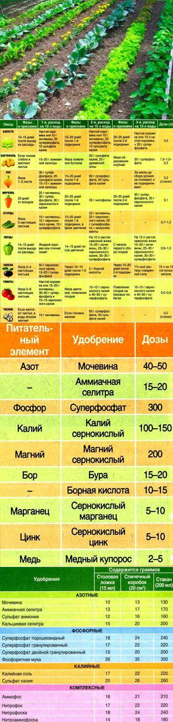 Календарь подкормок для овощей