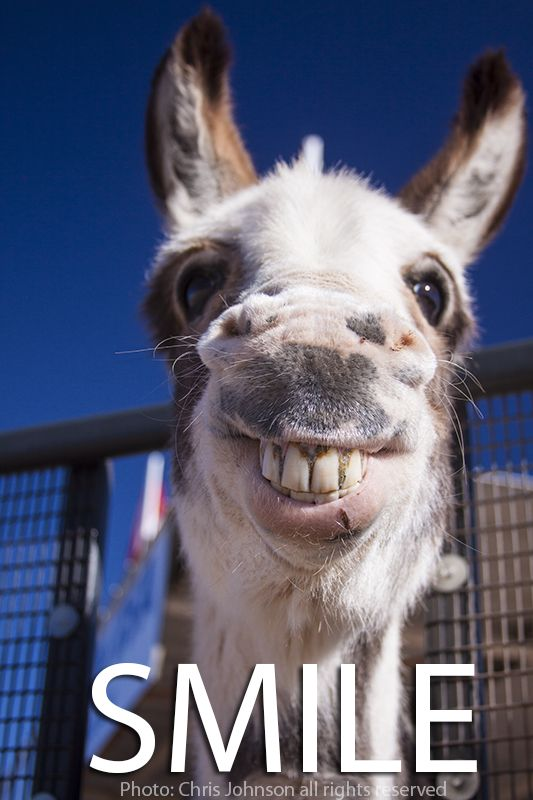 funny donkey faces - photo #32