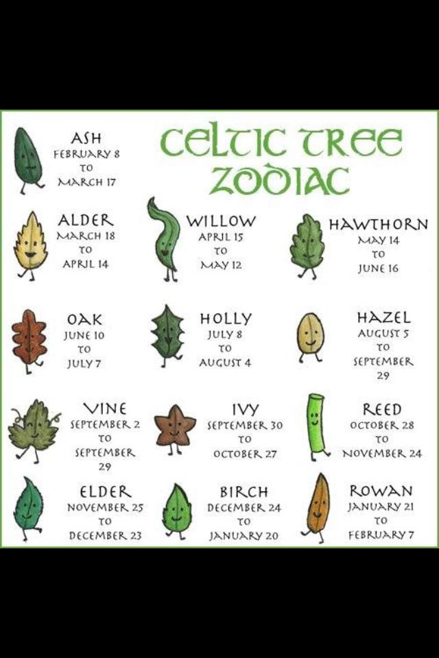 Celtic Tree Zodiac Symbols And Their Meanings Pinterest