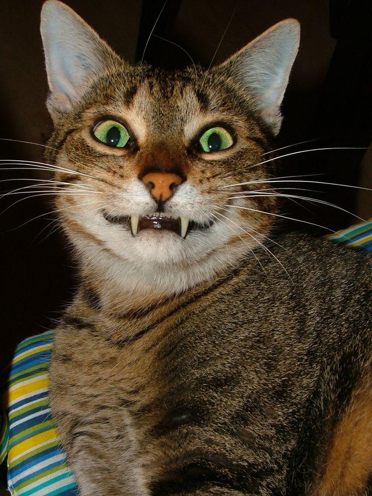 cheshire cat fanart