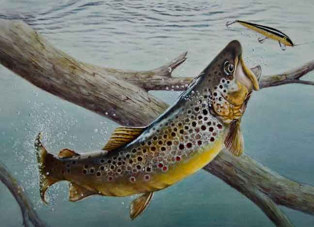 2013 minnesota trout stamp the art of fly fishing for Trout fishing mn