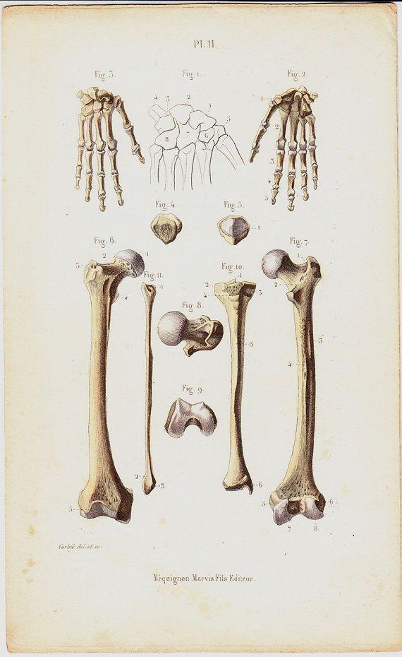 thesis on bones