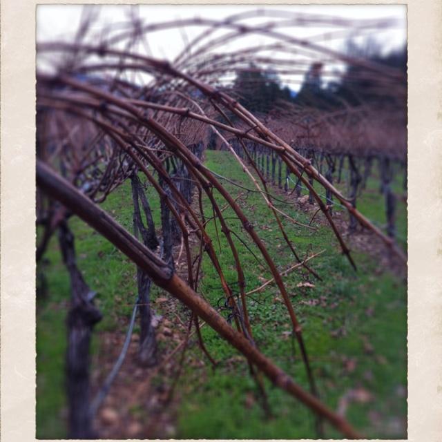 Winter vineyards in Napa.