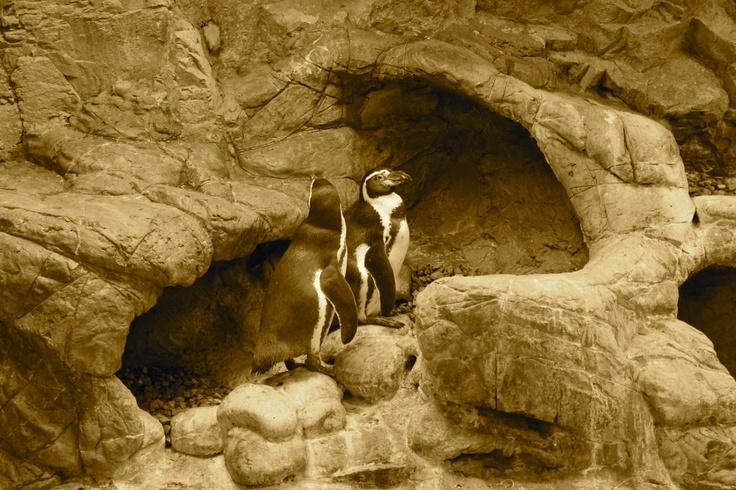 Niagara Aquarium Niagara Falls Ny My Little Corner Of