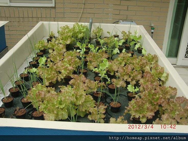 Aquaponics grow bed 07 grow pinterest for Aquaponics grow bed