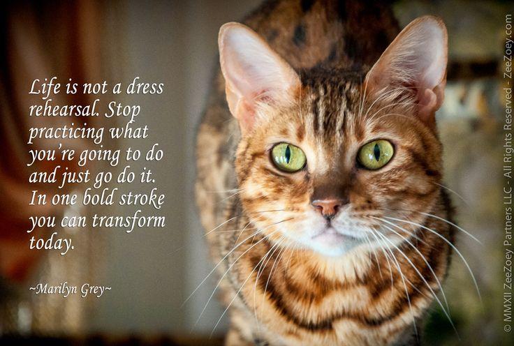 Animal Death Quotes Cat