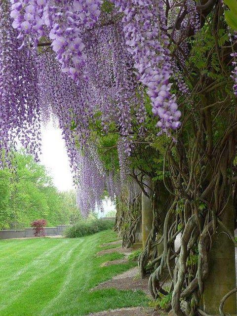 : Biltmore Estate gardens - North Carolina