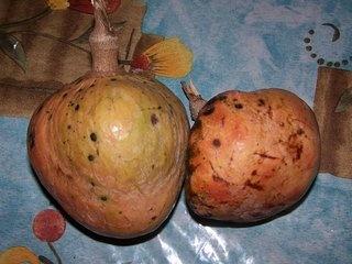 jamaican custard apple - photo #16