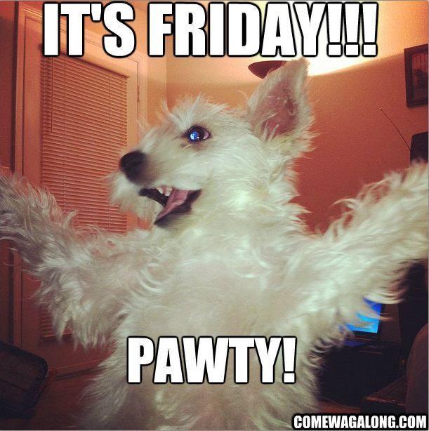 Funny Meme Yay : Yay friday pets pinterest