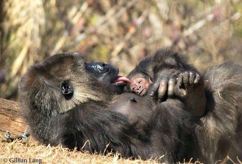 cincinnati zoo father's day 2015