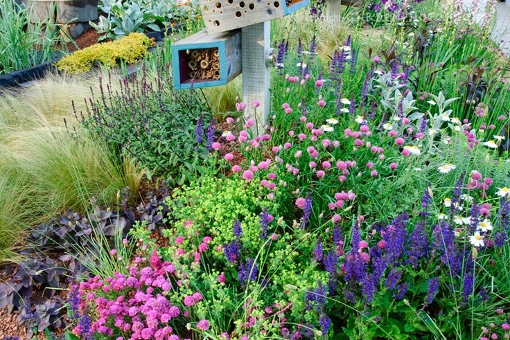 Wildflower garden shady area landscaping pinterest for Wildflower garden designs