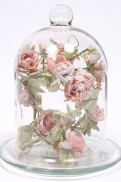 Roses under glass cloches or under glass pinterest for Rose under glass
