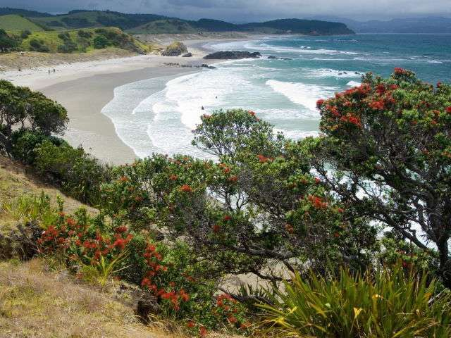 GORGEOUS TAWHARANUI - Just 40 minutes from town with good waves, no serious rips and great snorkeling. Can get a bit busy on a good day, but you can always stop for a vineyard lunch at Matakana.
