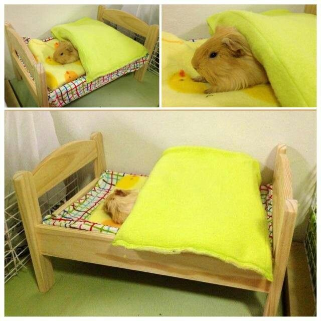 Guinea pig bed cuteness pinterest for How to make a guinea pig bed