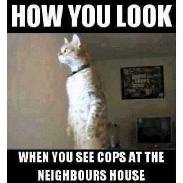 Funny Pics Cops The Neighbors Lol