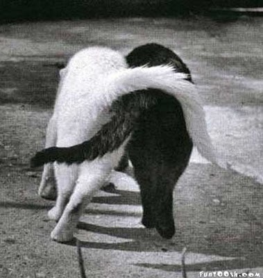 Image result for cats hugging