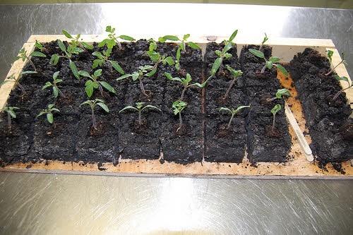 The diy soil block maker 7 plans dirt between my toes for Soil block maker