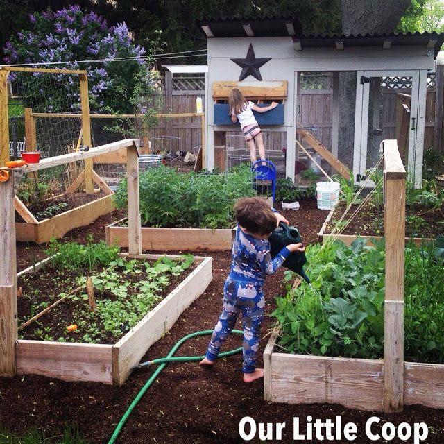 Urban Backyard Farmer : urban farm, backyard chickens, urban homestead, back to basics