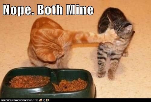 This photo is not of my cats, but it totally could have been. Ollie, my chubby orange boy, was my eater and Abner sometimes couldnt get his fair share.