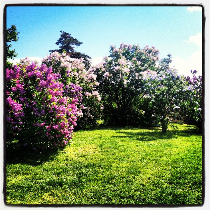 a critique of the lilac festival in rochester Lilac festival inc in rochester, new york (ny)  lilac festival inc:  (additional info to increase the weight and the placement of your review and ratings).