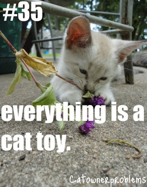 Owner Problems. #cat #humor #cats #funny #lolcats #meme #cute #quotes ...